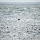 Seehund am Ellenbogen