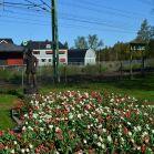 Der Tulpen Schaffner