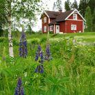 Lupinen & Schwedenhaus